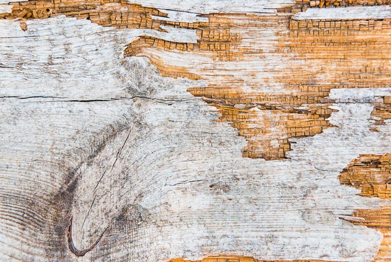 Gammalt åldrigt trä för bakgrund arkivbilder