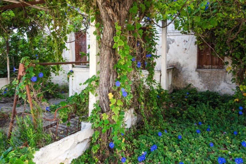 Gammalt övergett hus som är bevuxet med grönska royaltyfria bilder