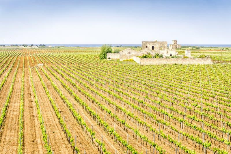 Gammalt övergett vinodlinghus i vingården, Italien royaltyfri bild