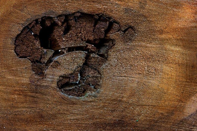 Gammalt bekymrat tvärsnitt för trädcirkel royaltyfri bild