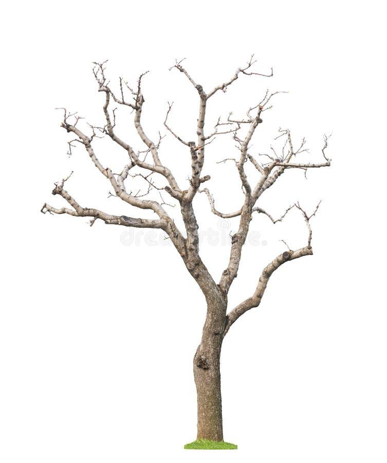 Gammalt beskurit träd arkivfoton