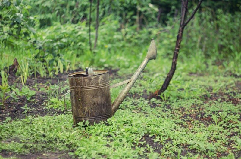 Gammalt bevattna kan i trädgården arkivbilder