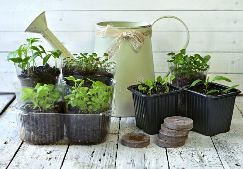 Gammalt bevattna kan med plantor av blommor och grönsaker på retro träbakgrund fotografering för bildbyråer