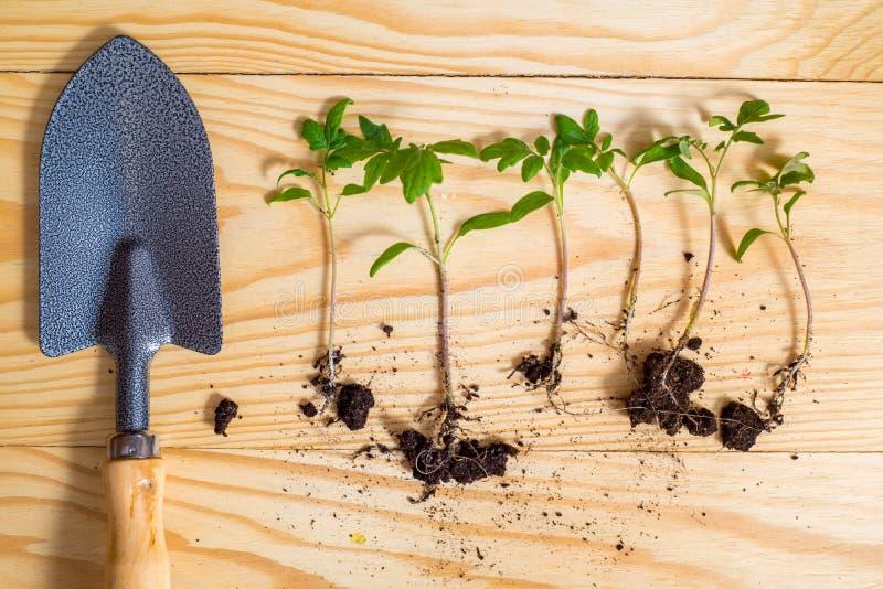 Gammalt bevattna kan med plantor av blommor och gr?nsaker p? retro tr?bakgrund Hem- tr?dg?rd f?r tappning och planteraobjekt, royaltyfria bilder