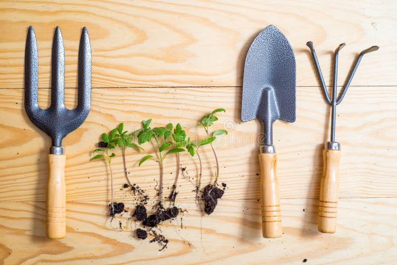 Gammalt bevattna kan med plantor av blommor och gr?nsaker p? retro tr?bakgrund Hem- tr?dg?rd f?r tappning och planteraobjekt, royaltyfri bild