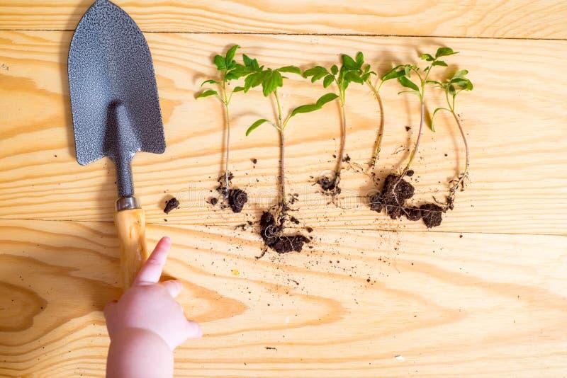 Gammalt bevattna kan med plantor av blommor och gr?nsaker p? retro tr?bakgrund Hem- tr?dg?rd f?r tappning och planteraobjekt, royaltyfria foton
