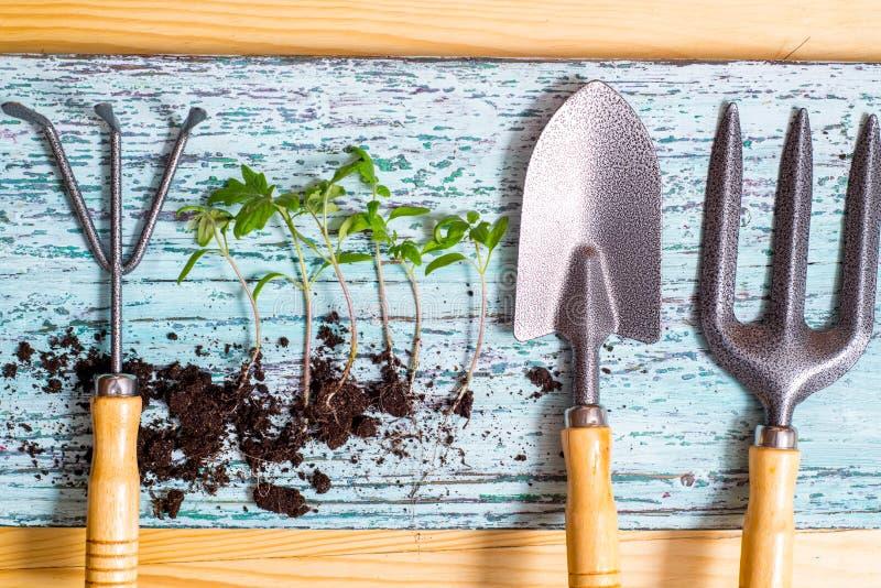 Gammalt bevattna kan med plantor av blommor och gr?nsaker p? retro tr?bakgrund Hem- tr?dg?rd f?r tappning och planteraobjekt, royaltyfri fotografi