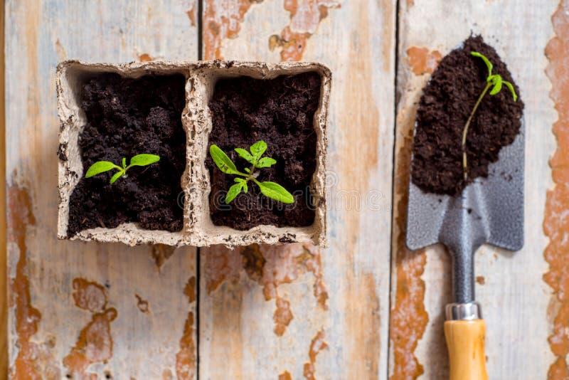 Gammalt bevattna kan med plantor av blommor och gr?nsaker p? retro tr?bakgrund Hem- tr?dg?rd f?r tappning och planteraobjekt, arkivbilder