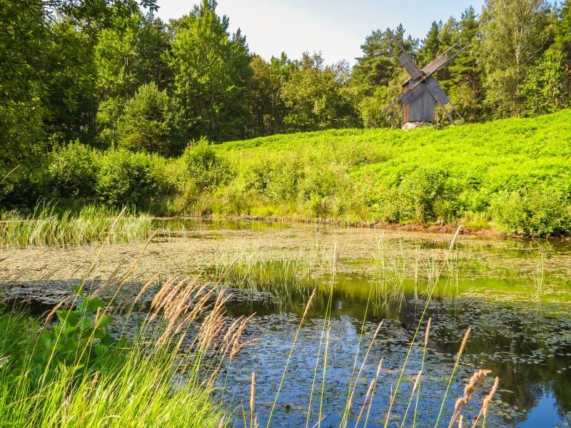 Gammalt damm i estonian bygd royaltyfri bild