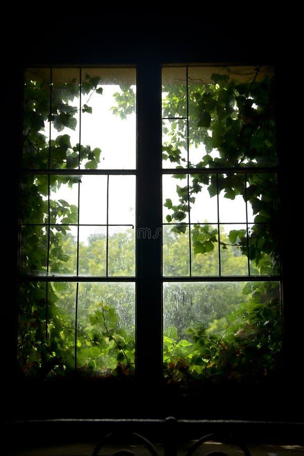 Gammalt fönster med gröna sidor royaltyfria foton