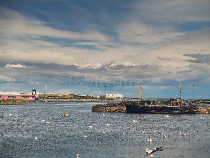 Gammalt fiska skepp och vita svanar koloni, Claddagh, Galway stad, Irland, molnig himmel royaltyfri foto