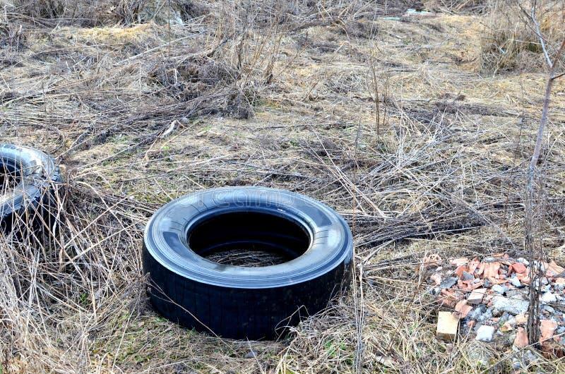 Gammalt kasserat gummigummihjul i skogen, bakgrund royaltyfria bilder
