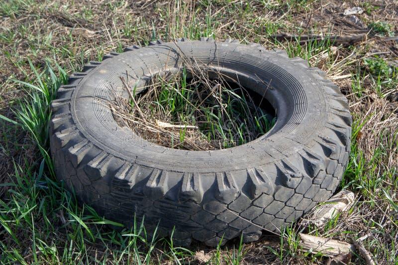 Gammalt kasserat gummigummihjul i skogen royaltyfria foton