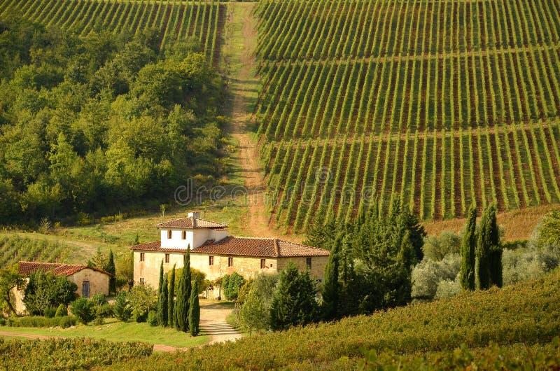 Gammalt lantbrukarhem med rader av wineyarden i höst i tuscany royaltyfri bild