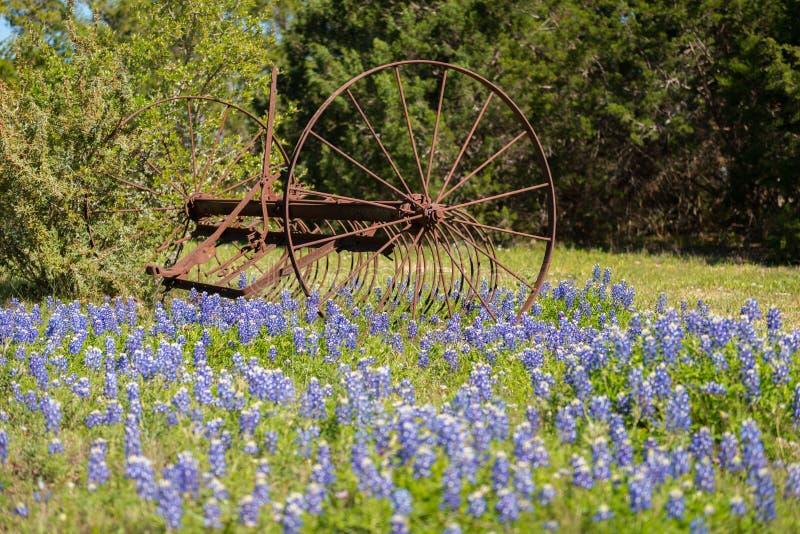 Gammalt lantbrukhjälpmedel i Bluebonnetblommor royaltyfri fotografi