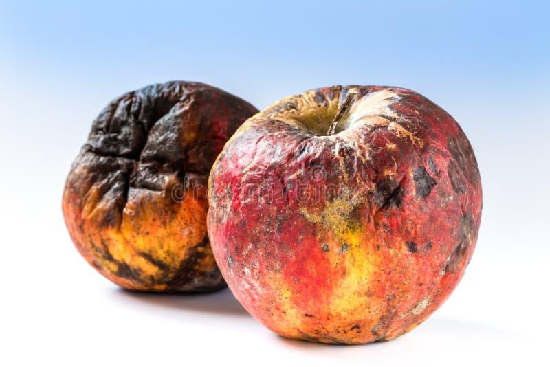 gammalt ruttet för äpple arkivfoto