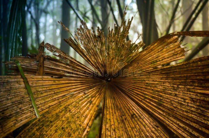 Gammalt ruttet palmtreeblad i djungel arkivfoton
