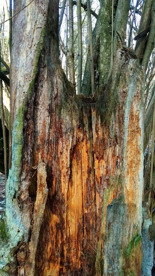 Gammalt ruttet trä arkivbilder