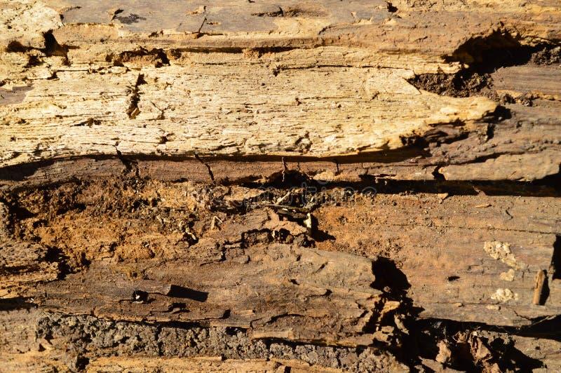 Gammalt ruttet trä fotografering för bildbyråer