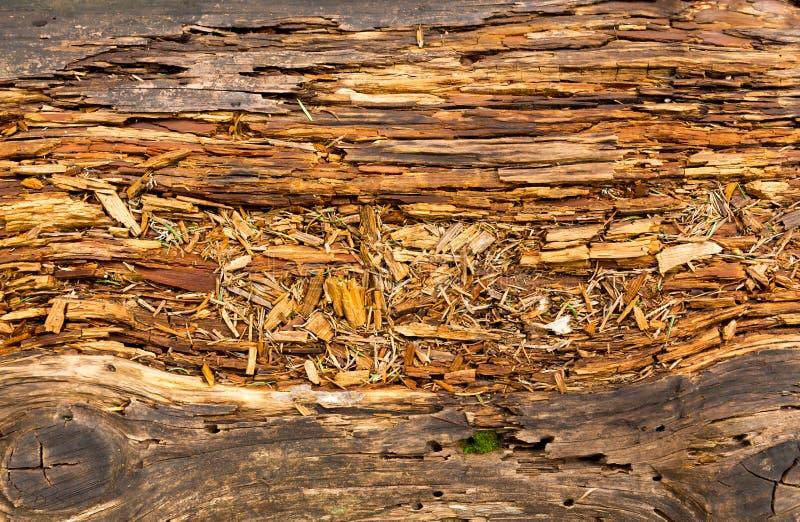 Gammalt ruttet trä arkivbild