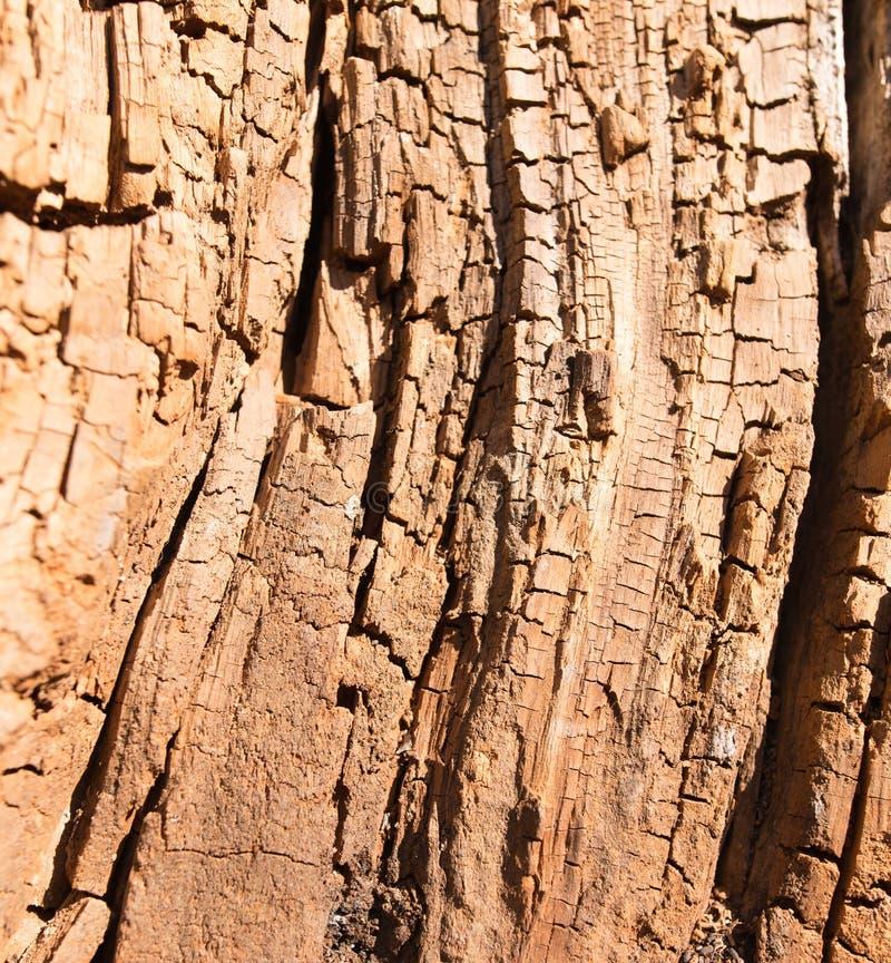Gammalt ruttet trä i ett träd som en bakgrund arkivbilder