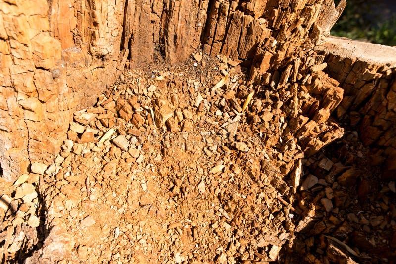 Gammalt ruttet trä i ett träd som en bakgrund royaltyfri bild