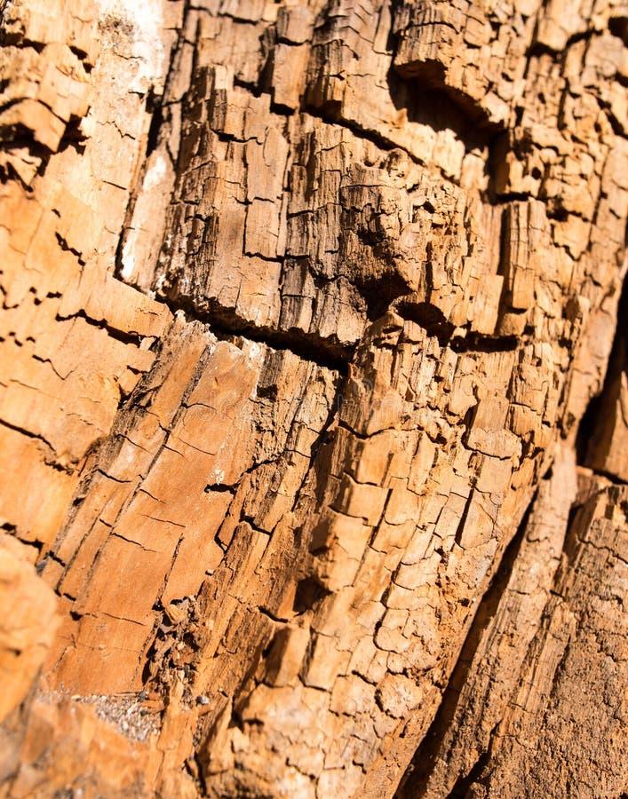Gammalt ruttet trä i ett träd som en bakgrund royaltyfri foto