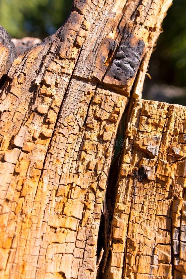 Gammalt ruttet trä i ett träd som en bakgrund arkivbild