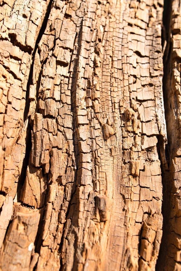 Gammalt ruttet trä i ett träd som en bakgrund royaltyfria foton