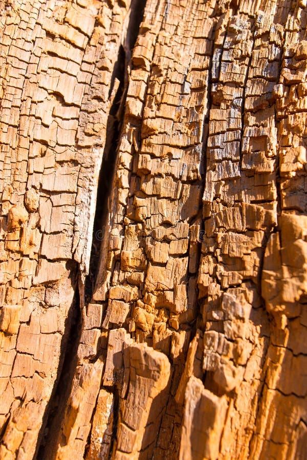 Gammalt ruttet trä i ett träd som en bakgrund arkivfoton