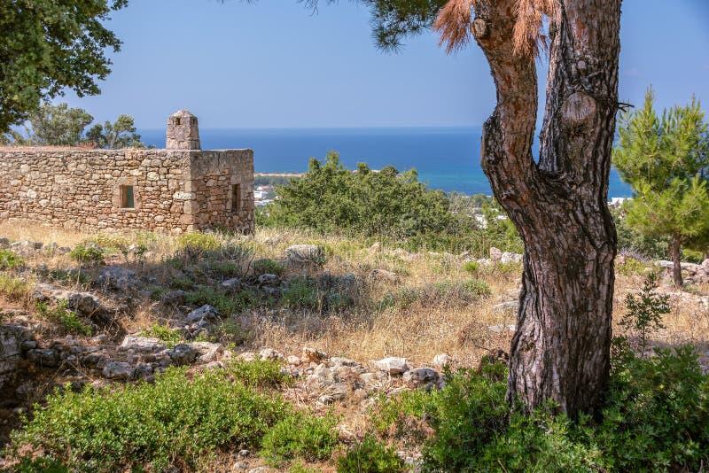 Gammalt sörja trädet, och forntida stena huset i berg field treen rhodes Grekland royaltyfri fotografi