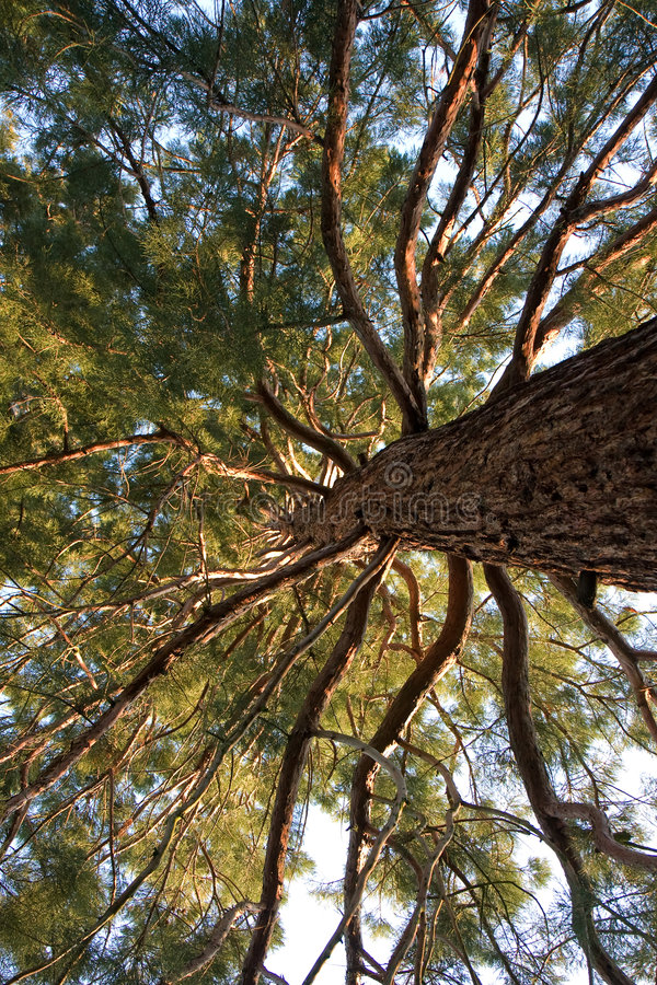 gammalt sörja treen mycket arkivbilder