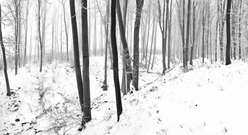 gammalt snöig för skog arkivbild