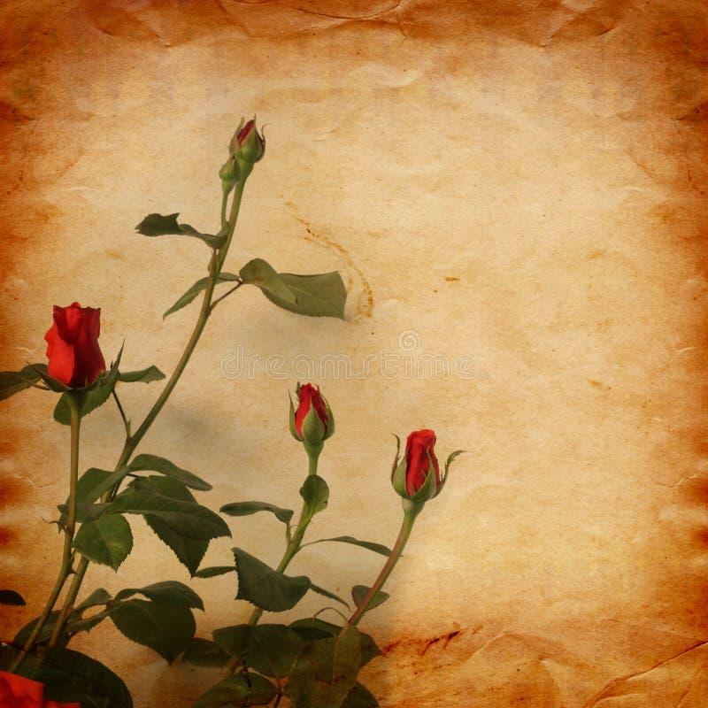 Gammalt tappningkort med en bukett av härliga rosa rosor royaltyfri illustrationer