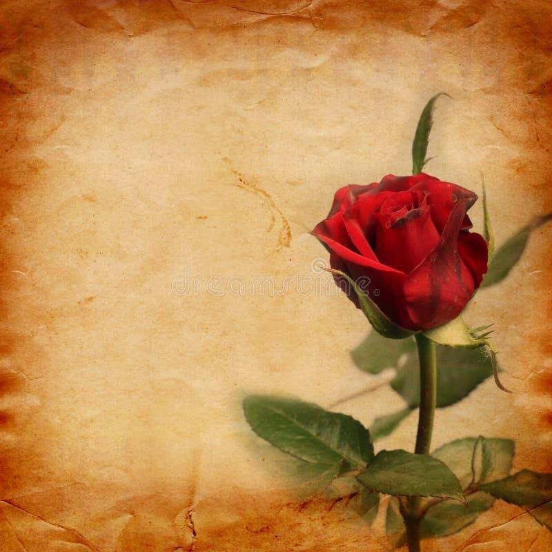 Gammalt tappningkort med en bukett av härliga rosa rosor arkivfoto
