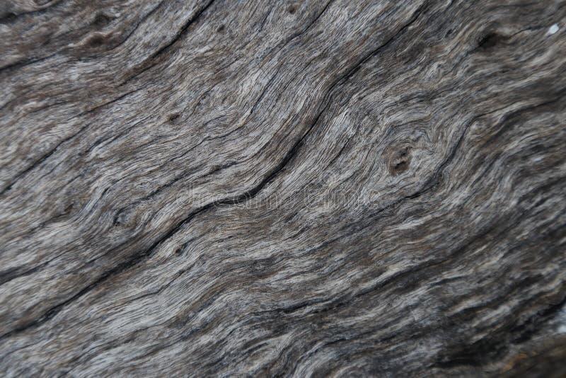 gammalt texturträ arkivbilder