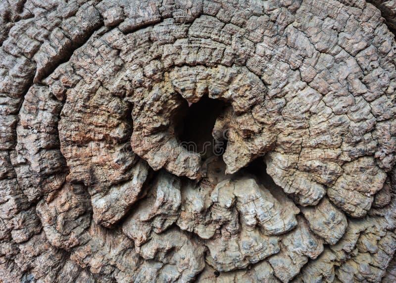 gammalt trä, årlig cirkel, texturer arkivbild