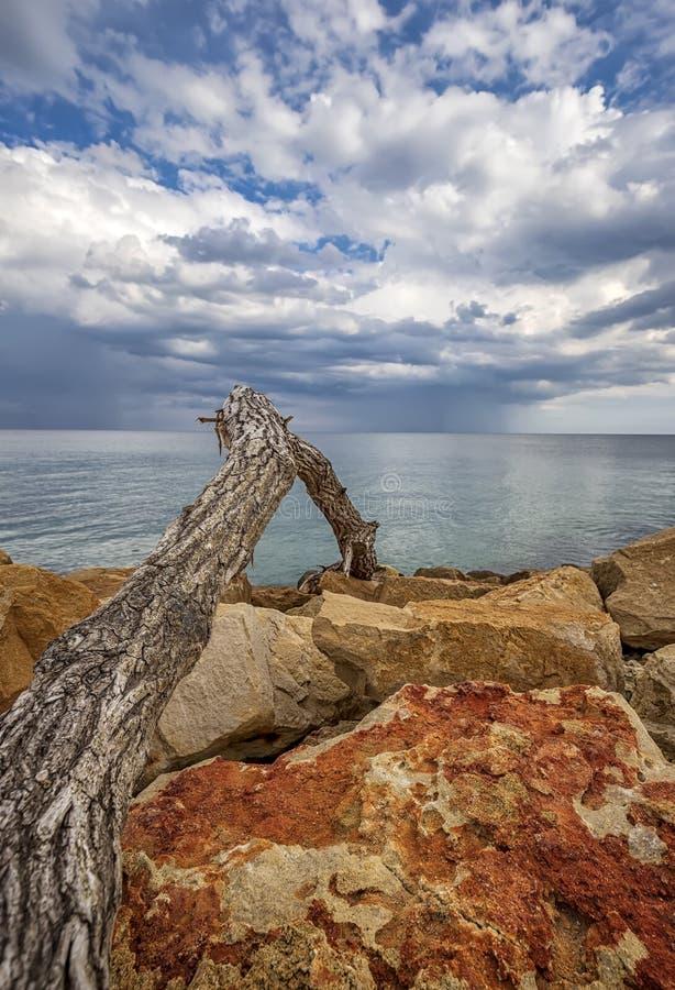 Gammalt trä på färgade stenar på en strand med skönhetskmoln vid horisonten arkivbild