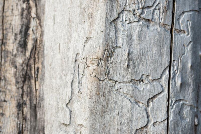 Gammalt trä som bakgrund eller textur arkivbilder