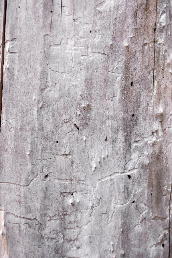 Gammalt trä som bakgrund eller textur royaltyfria foton