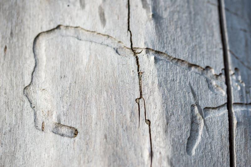 Gammalt trä som bakgrund eller textur arkivbild