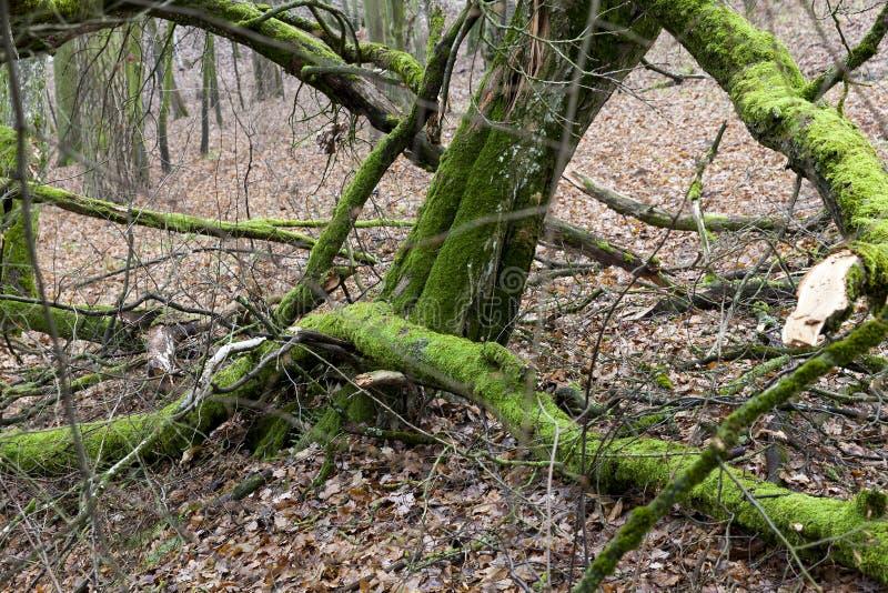 Gammalt trä, trä arkivfoto