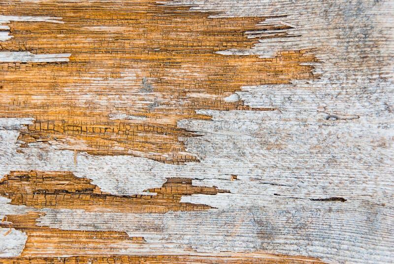 Gammalt träd för bakgrund arkivbilder