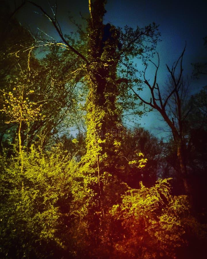 Gammalt träd för stormig natt royaltyfri fotografi
