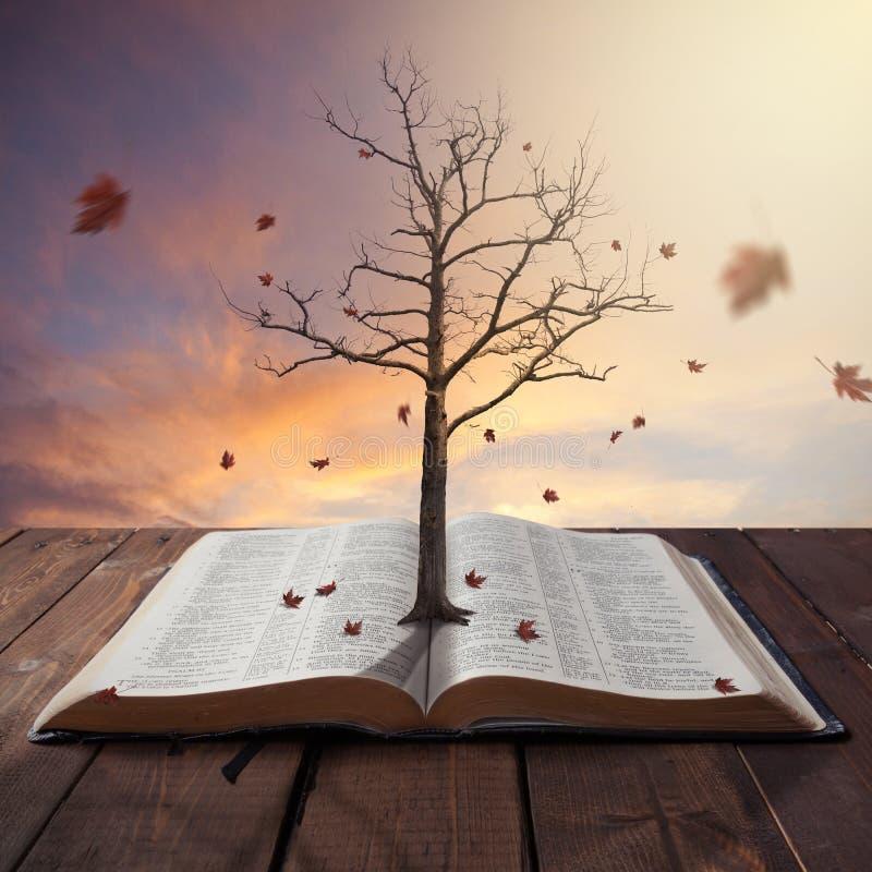 Gammalt träd i bibel royaltyfria bilder