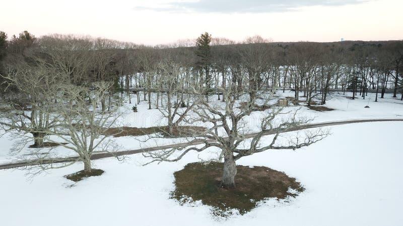 Gammalt träd i mitt av snö arkivbild