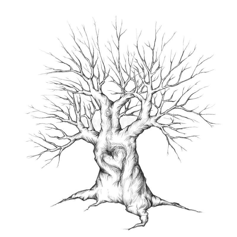 Gammalt träd med hjärta royaltyfri illustrationer