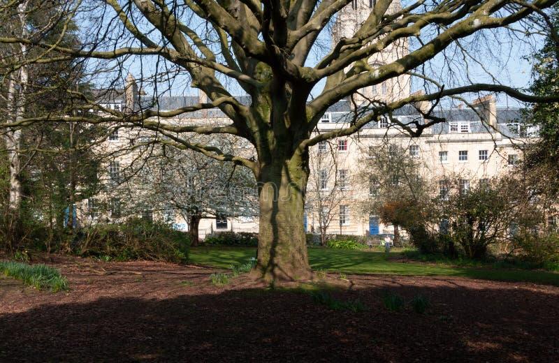 Gammalt träd med robusa filialer royaltyfria bilder