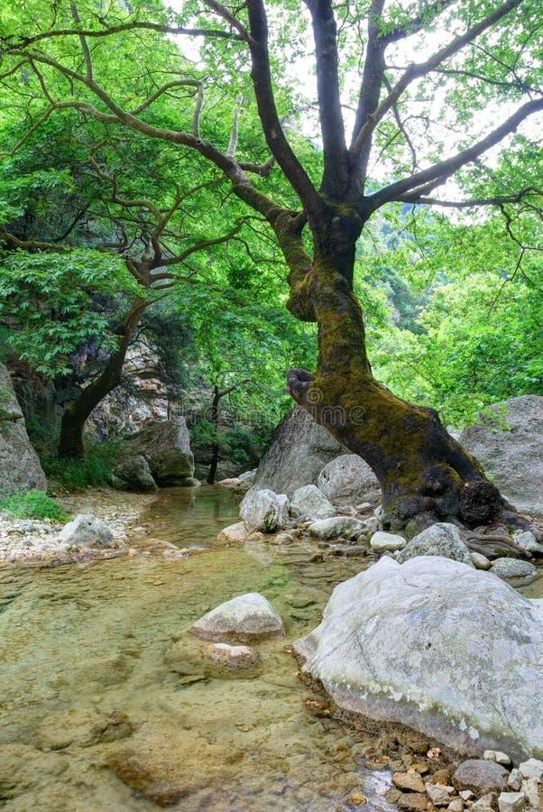 Gammalt träd och en liten liten vik arkivbilder