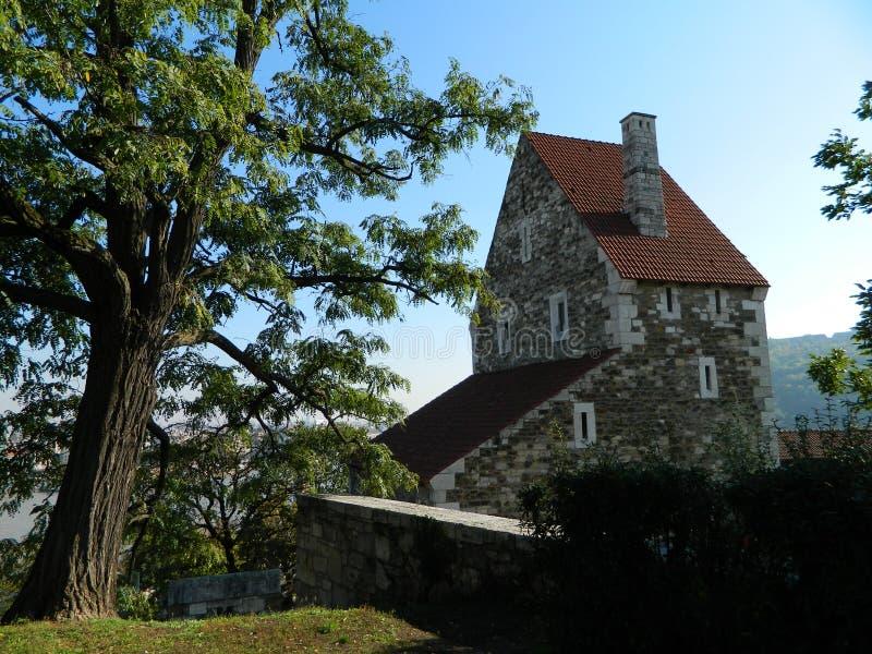 gammalt träd och hus i Budapest royaltyfri foto